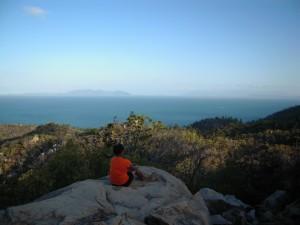 MAgnetic Island, Koala tour